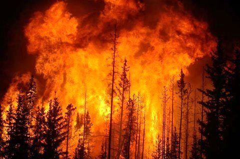 پیشنهاد افزایش بودجه تأمین تجهیزات اطفای حریق جنگلها